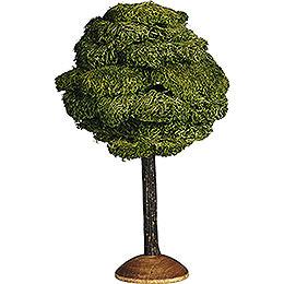 Broad Leaf  -  17cm / 6.7 inch