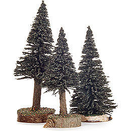 Spruce  -  Green  -  3 pieces  -  12cm / 4.7 inch to 16cm / 6.3 inch